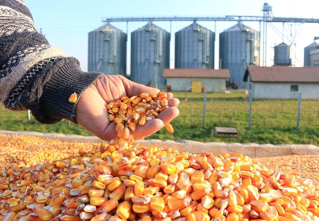 Denatured Ethanol   Non Denatured Ethanol   USP Grade  Ethanol Suppliers
